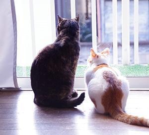 窓辺の二人