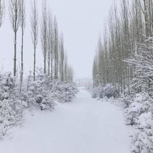 フンザ 静かな静かな冬 雪がどっさり 2020
