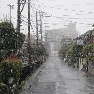 救いの雪?
