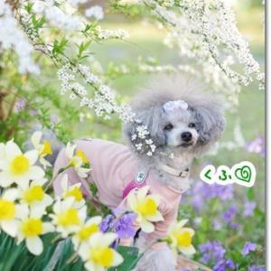 パパ実家のお庭は春満開!!