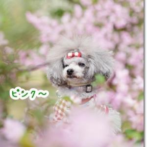 いつもの公園だってお花いっぱい!!
