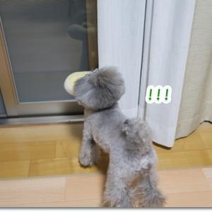窓ガラスに映った自分の姿にガルルル!!