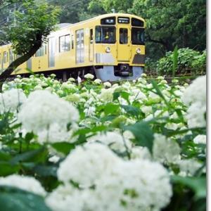 アナベルと電車