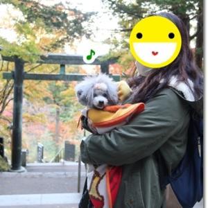 武蔵御嶽神社を抱っこ散歩