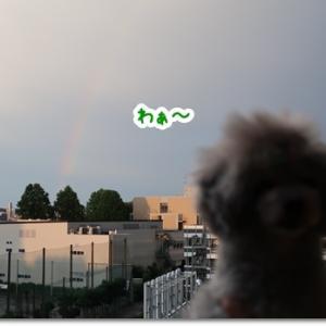 虹を一緒に♪