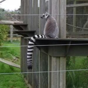 野性生物を絶滅から守るために:Jersey zoo