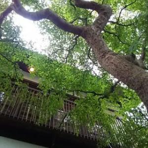 深大寺、紅葉は未だ、新蕎麦の季節!:蕎麦前