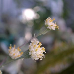 赤 黄 白と花が咲く〜♪