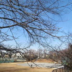ド近所の河津桜と梅の開花確認とハンバーガー