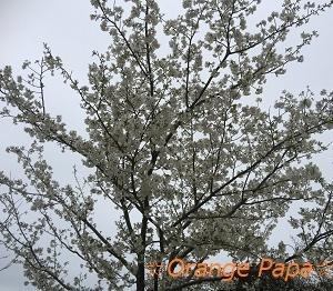 遠州灘海浜公園の桜♪