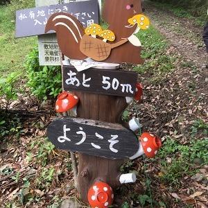 磐田市敷地の里山公園の花♪