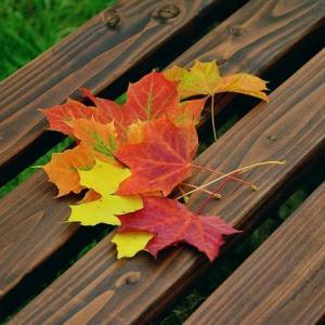 【Autumn color】