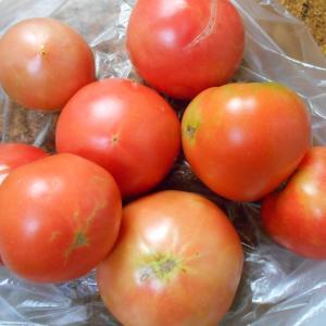 トマトの季節