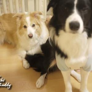 先の展開を予想できてる表情だよね 犬だけにワンパターンって これじゃぁ~バディと一緒だね