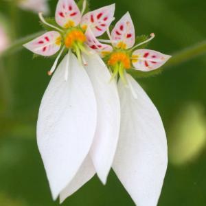 なんの花でしょう?