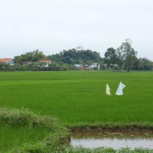 チャンパの王城・チャキエウ(ヴェトナム・クアンナム省)