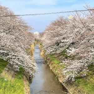 2021 桜・さくら