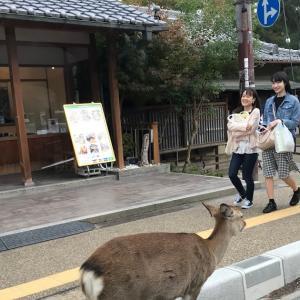ハルくん奈良に行く その2 奈良公園