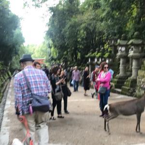 ハルくん奈良に行く その3 春日大社、東大寺