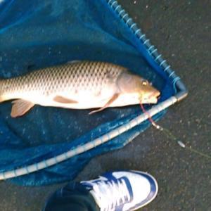 笹原川で鯉釣りを見学