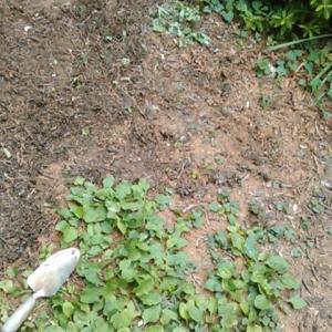 環境整備:庭の草むしり