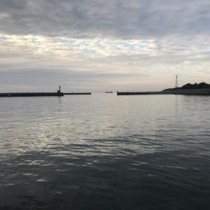 2018.12.23 妻鹿漁港 ヒイカ
