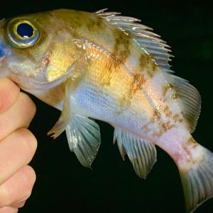 魚を美しく撮影する方法