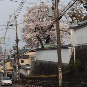 令和と花の寺