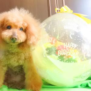 2月25日16歳のお誕生日おめでとう♪