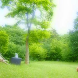 芝の上で♪