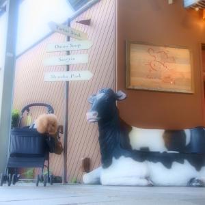 アウトレットの牛さんと♪