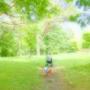 芝の上で@山中湖♪
