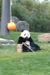 パンダを観た