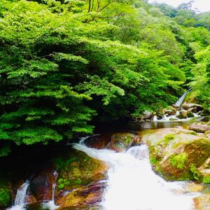 行きにくいけど行ってみたいリゾート、屋久島。