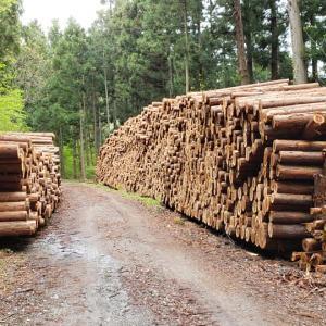 木の伐採現場に驚き!