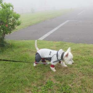 やっぱり雨なの~の週末はお山へ(^-^;