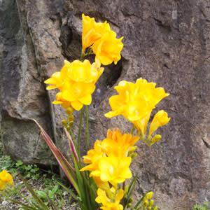 殺風景な庭にも花は咲く