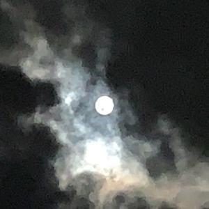中秋の名月・・・ かわいいプシュケと黛玉