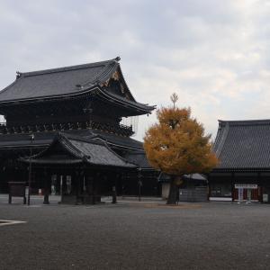 京都から帰ってきたら咲いてたバラ