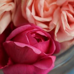カットしたバラと春のバラ、ギーサヴォア