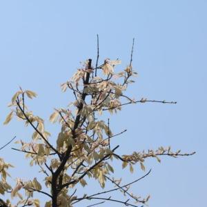 春の庭と春の花&次に咲くバラはヴィアンヴニュ?