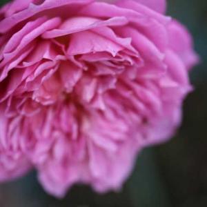 ジュビリーセレブレーション、みさき、今日のクリロ、春のウィリアムアンドキャサリン