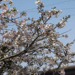 クリーピングタイム 春のピエールエルメ