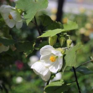 庭のお花と玄関のなんちゃって花壇