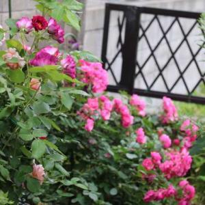 庭の奥の秘密の花園