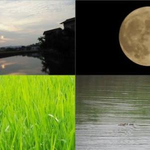 昨夕,昨夜,今朝の風景 夕景,月,田園風景