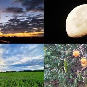 今朝の風景 日の出前,有明の月,田園風景,実りの秋・柿