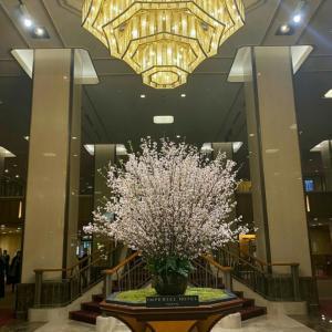 帝国ホテルの桜と雪組トップコンビの退団