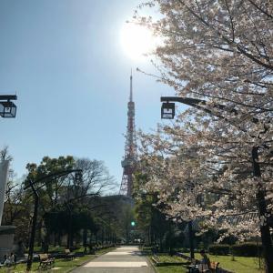 東京タワーと桜と菜の花