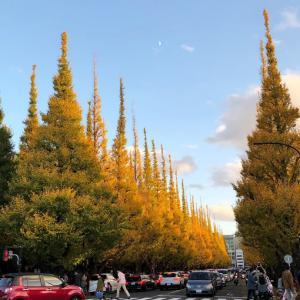 神宮外苑のイチョウ並木と早慶戦